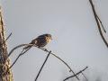 Bird_Sparrow
