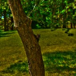 A Squirrel Posing for HDR