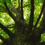 Tree Upshot